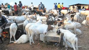 Small ruminants; Economic benefits, Challenges and Recommendations