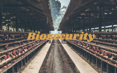 NEWCASTLE DISEASE CONTROL AND THE EFFECTIVENESS OF BIOSECURITY